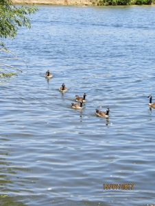 Ducks - because they're cool.